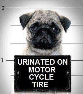 Urinated on motorcyle wheel